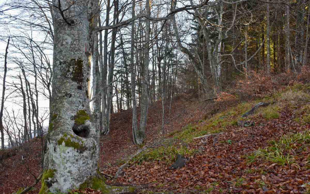 SP Čez Pogorišča na Kamen grič in nad domom na Travni gori v dolino